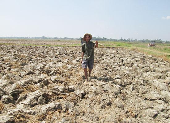 Các địa phương cần tích cực hỗ trợ nông dân chuyển những chân đất lúa bấp bênh nước tưới sang sản xuất cây trồng cạn. Ảnh: VĂN SỰ