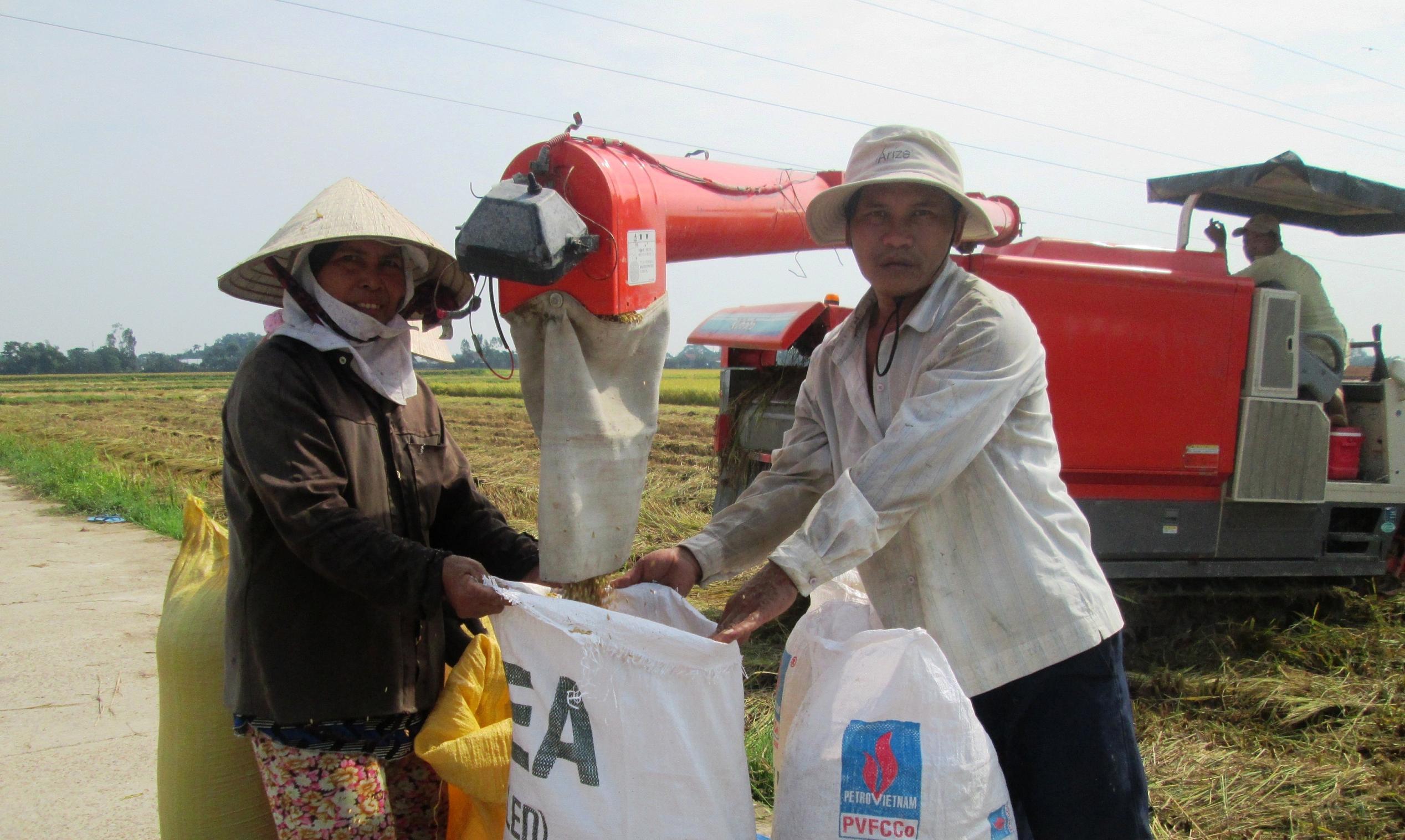Năm 2018, tổng sản lượng lúa của tỉnh đạt 462,2 nghìn tấn, tăng 1 nghìn tấn so với năm 2017. Ảnh: VĂN SỰ