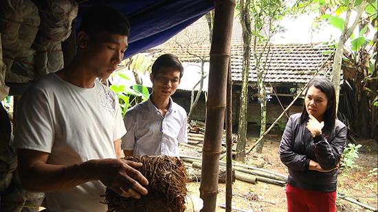 Mô hình trống nấm rơm mang lại hiệu quả kinh tế của anh Lê Thanh Hùng (người bên trái ảnh).