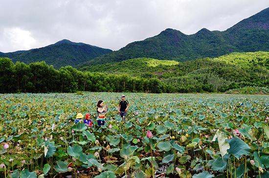 Những cánh đồng sen ở vùng Trà Lý của xã Duy Sơn mang lại nguồn thu nhập cao cho nhiều hộ dân. Ảnh: H.N