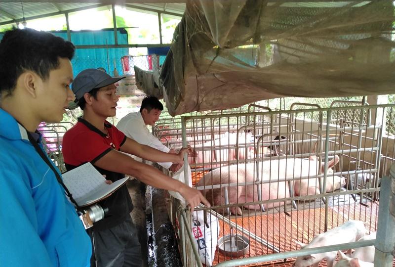 Anh Huân (đứng giữa) chia sẻ về cách chăm sóc trang trại heo. Ảnh: L.C