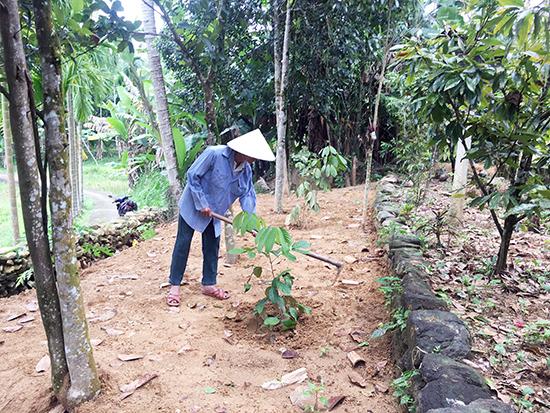 Xóa vườn tạp vừa đem lại hiệu quả kinh tế ổn định, vùa tạo được cảnh quang đẹp cho các hộ gia đình.