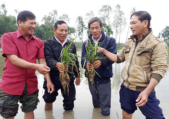Nhóm nông dân Bình Quý cùng chung ý tưởng về làm nông nghiệp hữu cơ đã thành lập nên HTX và bước vào con đường sản xuất minh bạch.