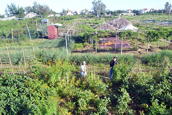 Toàn cảnh không gian An Farm Hội An. Ảnh: QUANG VIỆT