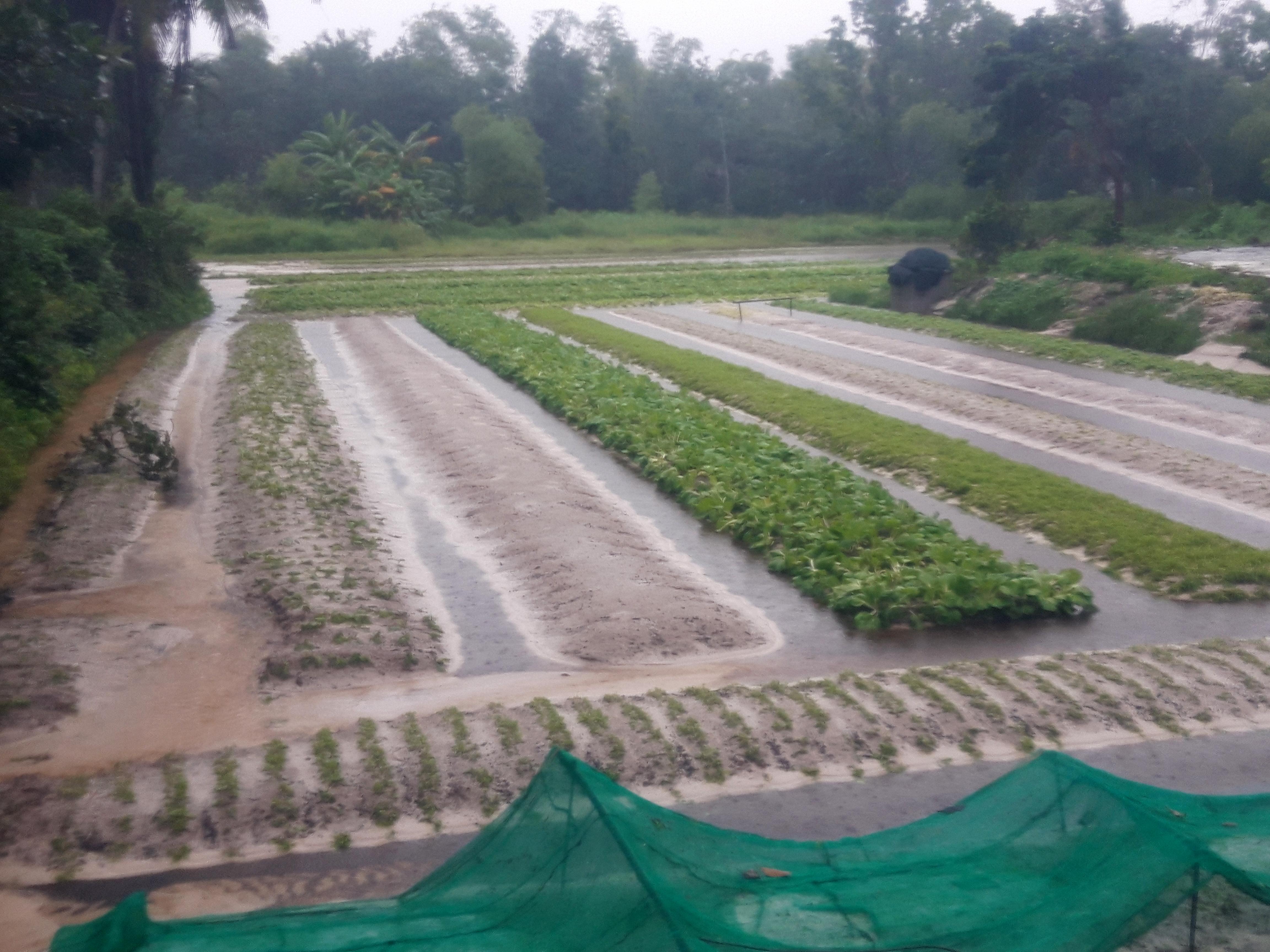 Ruộng vườn tan hoang sau khi nước ngập tràng qua. Ảnh: Hồ Quân