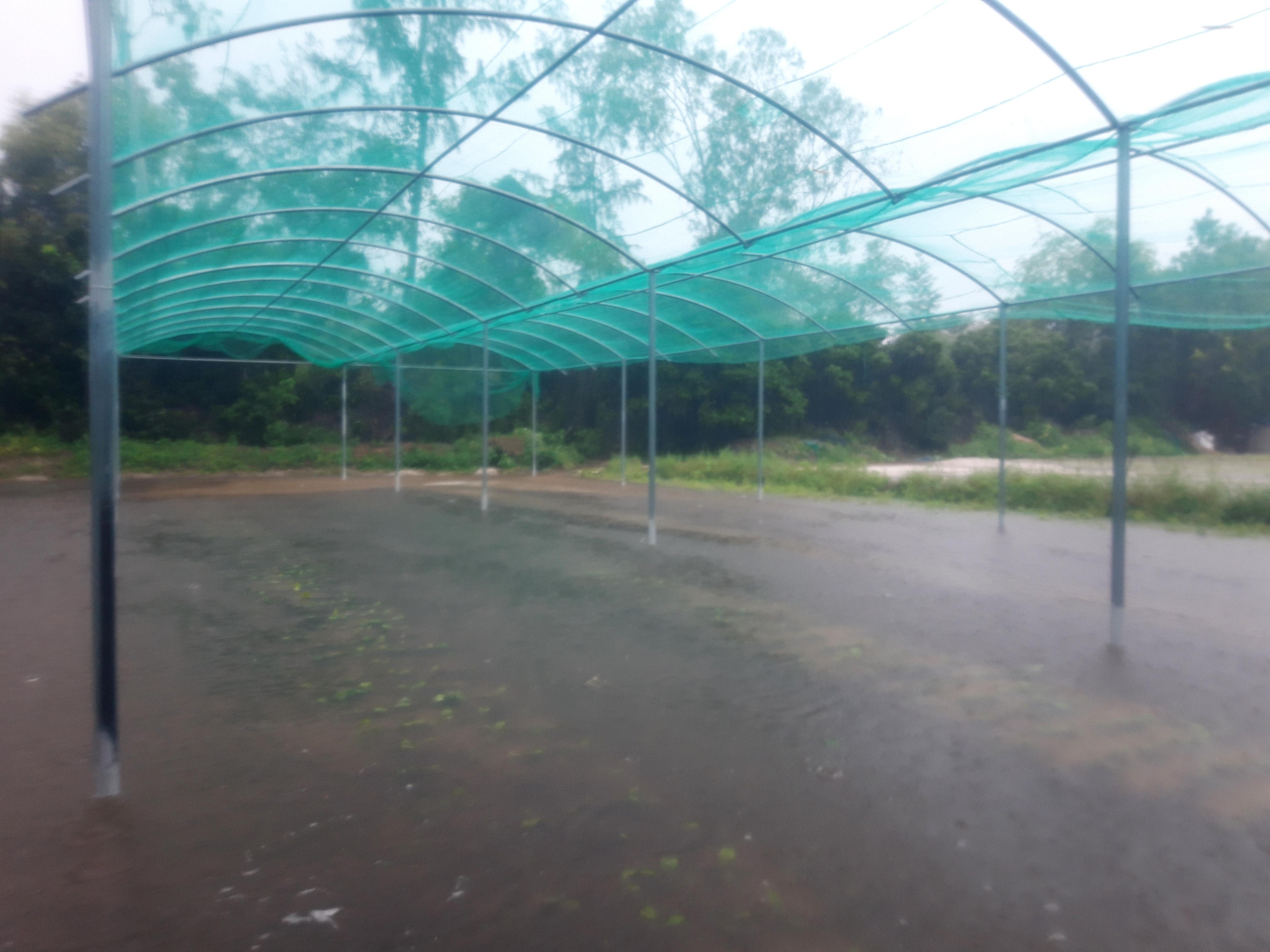 Hơn 400ha rau, quả vụ đông huyện Thăng Bình đang ngập chìm trong nước . Ảnh: Hồ Quân