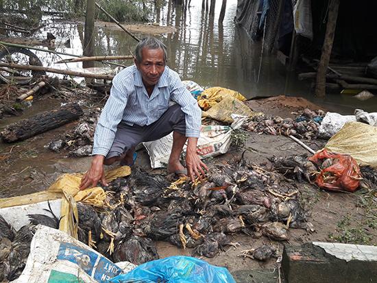 Trang trại nuôi gà thả vườn của ông Nguyễn Thanh gần như mất trắng sau khi nước lũ dâng cao đột ngột.