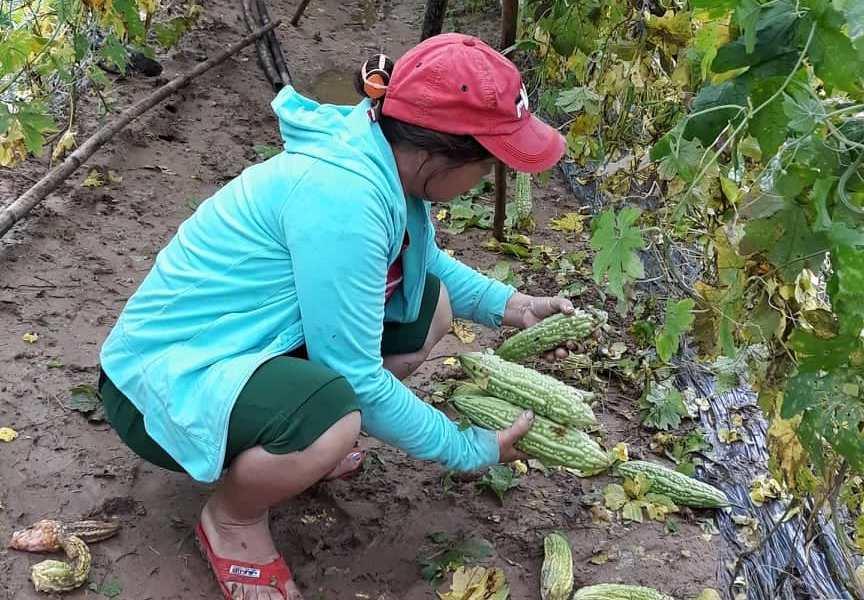 Nguy cơ trộm cắp nông sản sau mưa lũ có xu hướng gia tăng. Trong ảnh: Nông dân thôn Bàu Tròn nhặt nhạnh nông sản sau lũ. Ảnh C.N