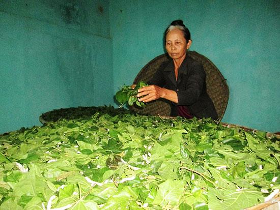 Ứng dụng khoa học công nghệ để nghề trồng dâu nuôi tằm mang lại hiệu quả cao. Ảnh: H.N