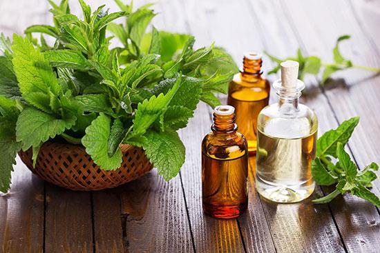 Một số loại tinh dầu được dùng trong mùa đông: Tinh dầu tràm, tinh dầu quế, tinh dầu gừng, tinh dầu sả chanh…