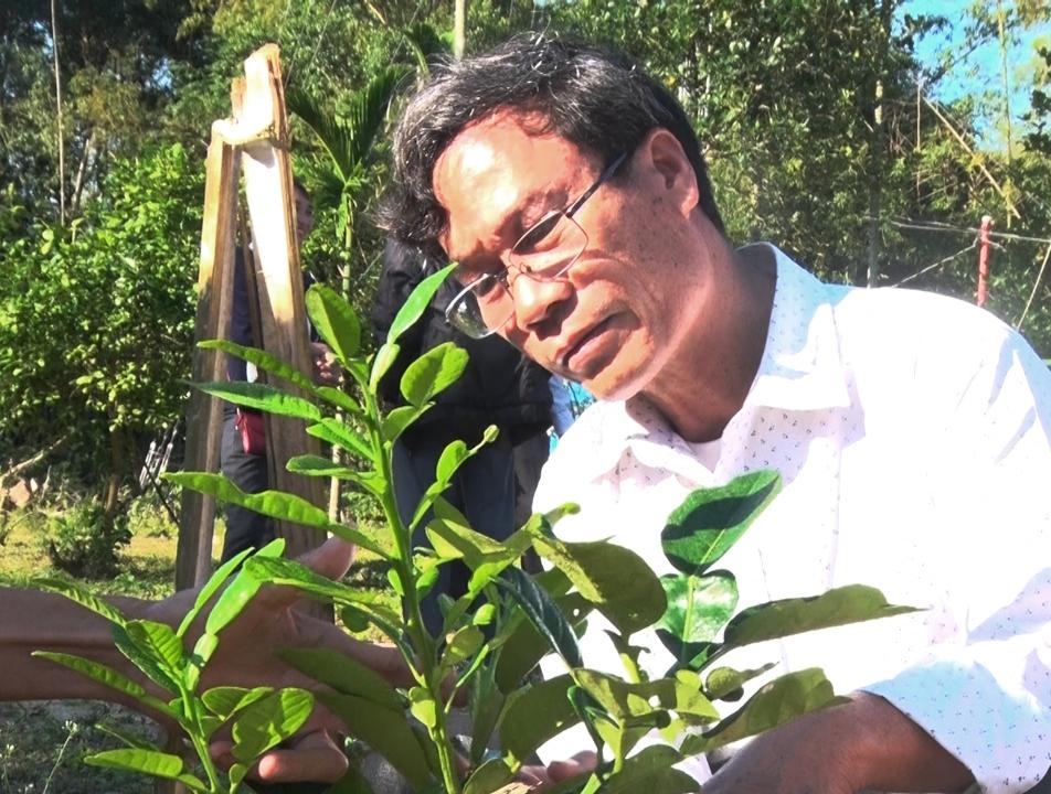 Vườn bưởi da xanh ruột hồng diện tích 0,2ha của ông Nguyễn Văn Tư ( thôn Thạnh Hòa 1)