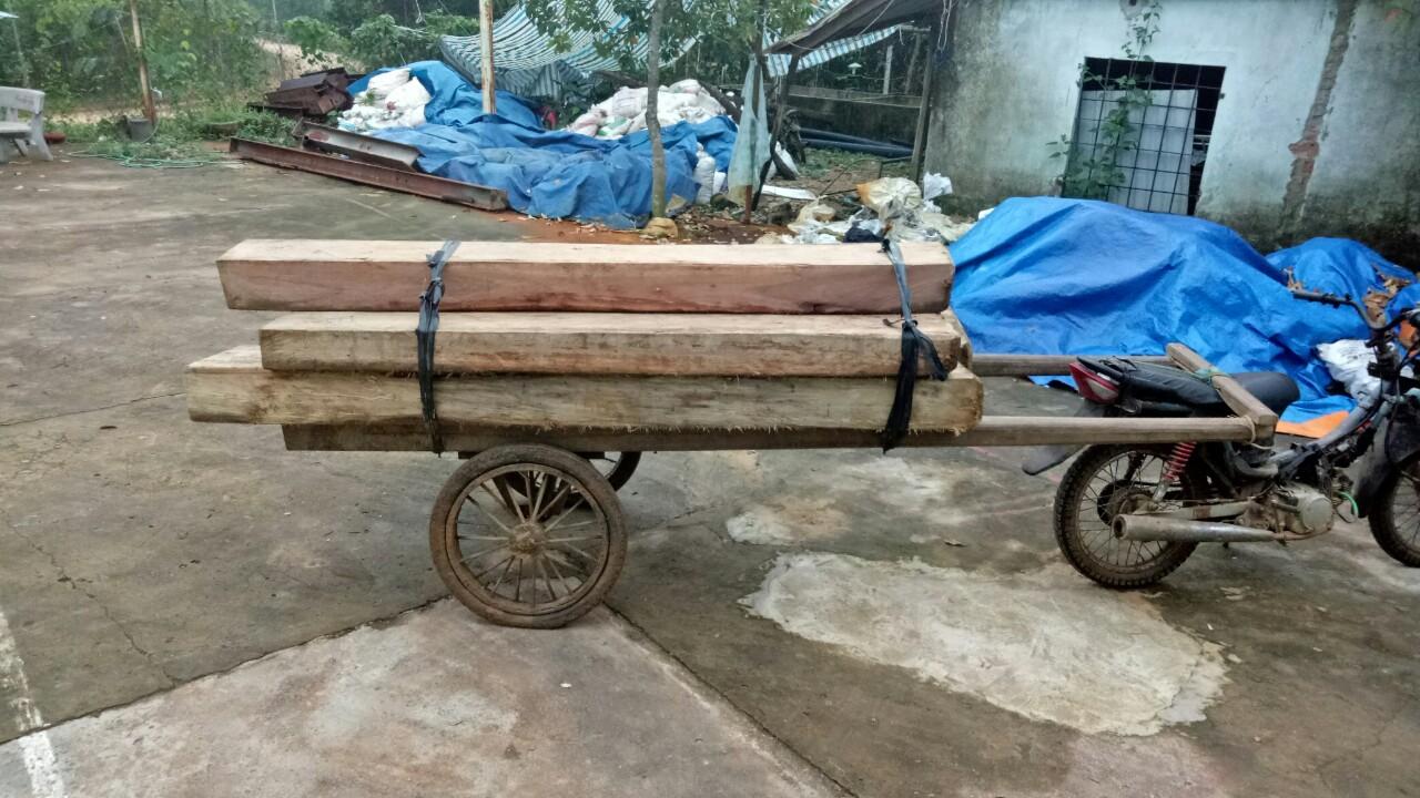 Số gỗ tang vật bị tạm giữ. Ảnh: L.T