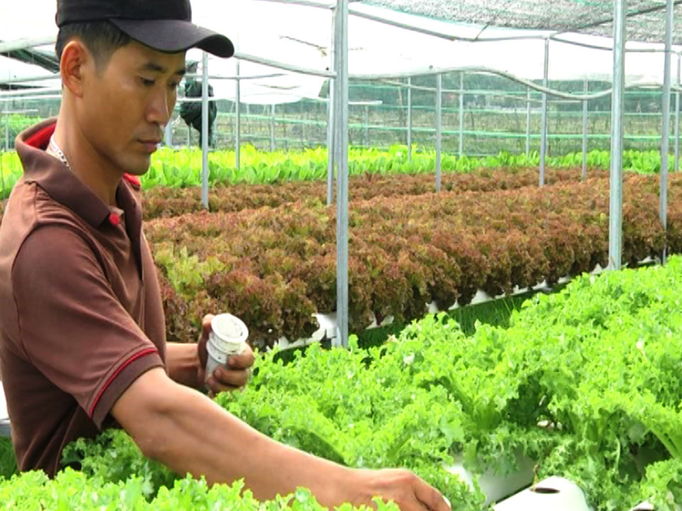 Sustainable agricultural development – one of the key targets of Quang Nam province.
