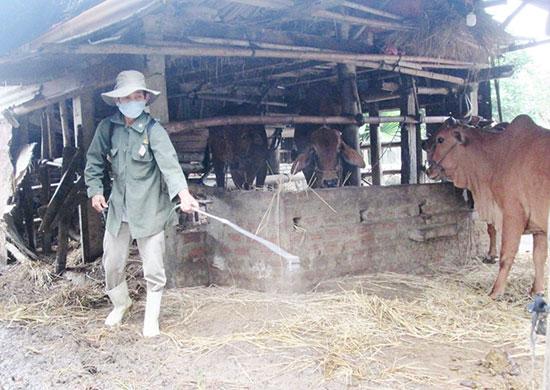 Người chăn nuôi cần thường xuyên phun tiêu độc khử trùng chuồng trại nhằm hạn chế nguy cơ mầm bệnh phát tán. Ảnh: VĂN SỰ