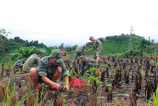 Các chiến sĩ Lữ đoàn Thông tin 575 giúp đồng bào Cơ Tu trồng keo, phát triển kinh tế. Ảnh: Đ.N