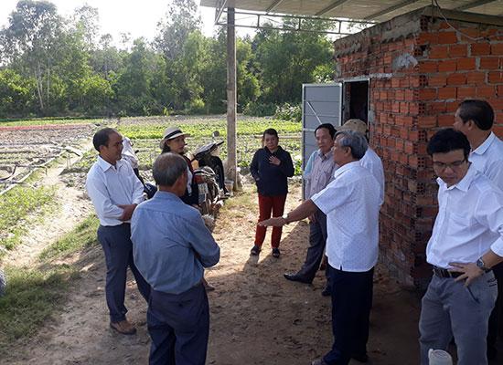 Hợp tác xã Nông nghiệp Kỳ Anh liên kết với các hợp tác xã trong tỉnh để đảm bảo đầu ra sản phẩm rau an toàn. Ảnh: X.T