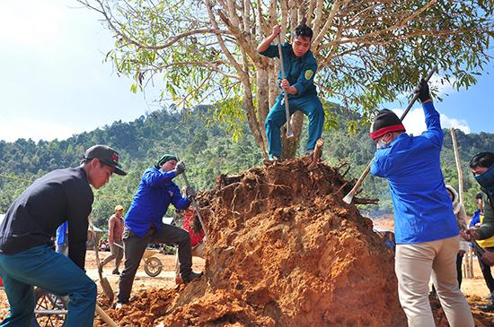 Thanh niên các xã trong huyện Tây Giang cũng về thôn Abanh 2 để thực hiện các phần việc giúp dân. Ảnh: VINH ANH