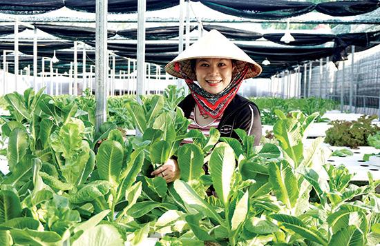 Nông trại sản xuất rau thủy canh của chị Nguyễn Thị Y ở xã Duy Hải (Duy Xuyên) mỗi ngày cung ứng ra thị trường hơn 50kg các loại.Ảnh: Sự Tuấn