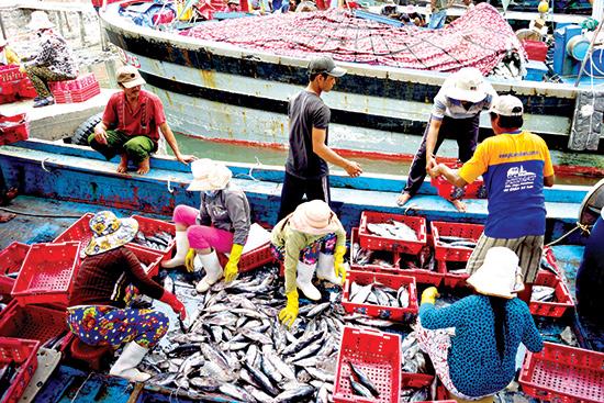 Nhộn nhịp cảng cá Kỳ Hà, Tam Quang (Núi Thành).  Ảnh: Phương Thảo