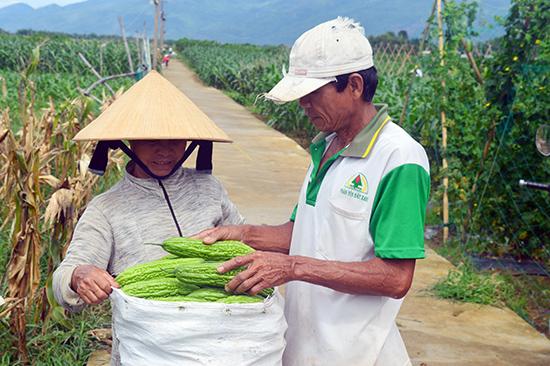 Quảng Nam có nhiều vùng sản xuất nông sản lớn nhưng chưa tạo dựng được thương hiệu và quy trình phân phối bài bản nên gặp khó khi tiếp cận thị trường Đà Nẵng. Ảnh: Q.T