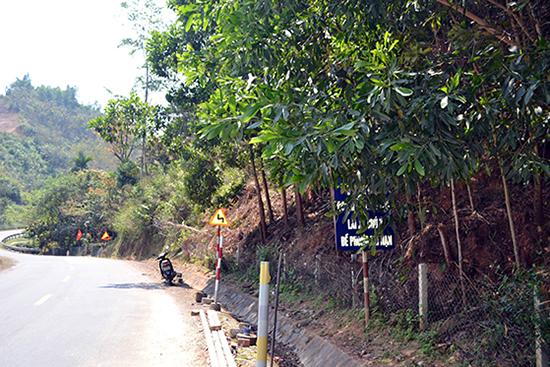 """Bảng cảnh báo """"Đường dốc quanh co liên tục, lái xe chú ý đề phòng tai nạn"""" tại lý trình km430+700, đường Hồ Chí Minh qua huyện Tây Giang bị che khuất bởi tán lá cây. Ảnh: C.T"""