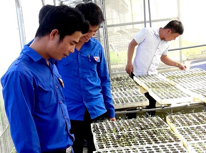 Thanh niên Phú Ninh tham quan mô hình rau sạch tại xã Tam Thành. Ảnh: CTV