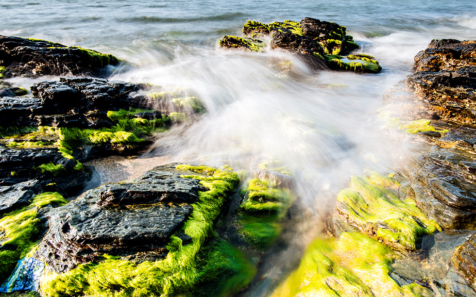 Green moss and silver waves make the reef more beautiful.