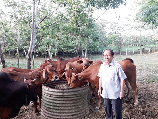 """Mô hình chăn nuôi gia trại của lão nông """"tỷ phú"""" ở Điện Thọ. Ảnh: P.PHƯƠNG"""