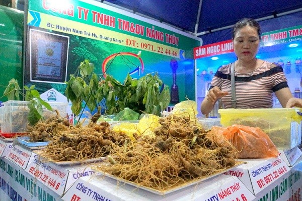 Ngoc Linh ginseng at a fair.