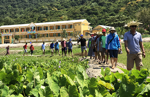 Green environment in Cham islands.
