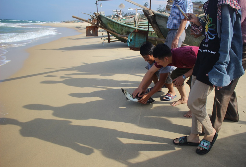 Releasing the tortoise back to the sea.