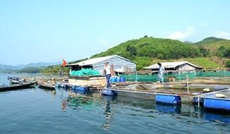 Đồng bào vùng cao nuôi cá trong lồng bè ở hồ thủy điện Sông Tranh 2. Ảnh: QUANG VIỆT