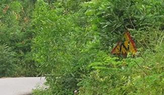Biển báo chỉ dẫn trên đường bị cây che lấp hoàn toàn