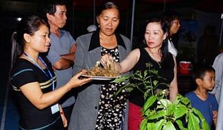 Ngoc Linh ginseng sold at the fair